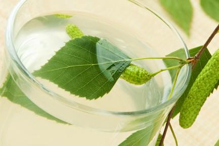 Birch sap (birch water, birch juice) during pregnancy