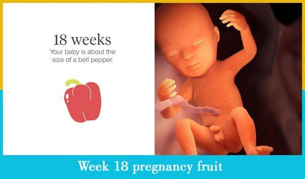 week 18 pregnancy fruit
