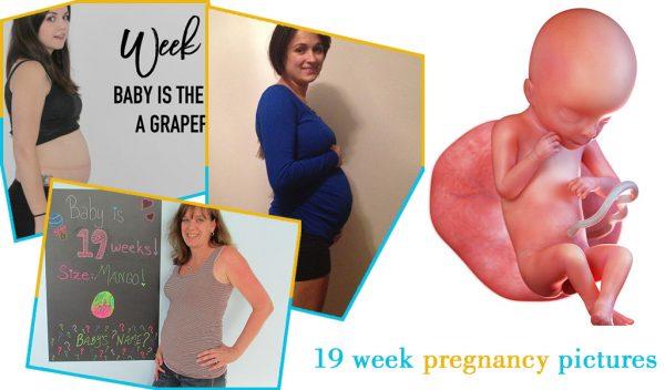 19 week pregnancy pictures
