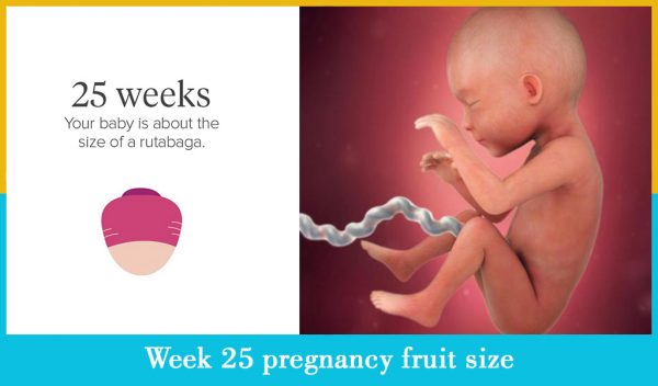 week 25 pregnancy fruit size